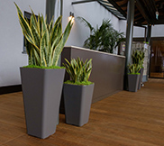 Tall Planters