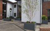 A range of planter sizes were used to green this office courtyard