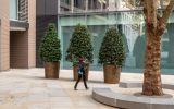 Bronze planters for public spaces