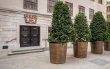 Large bronze plant pots for public spaces