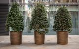 Custom sized bronze planters