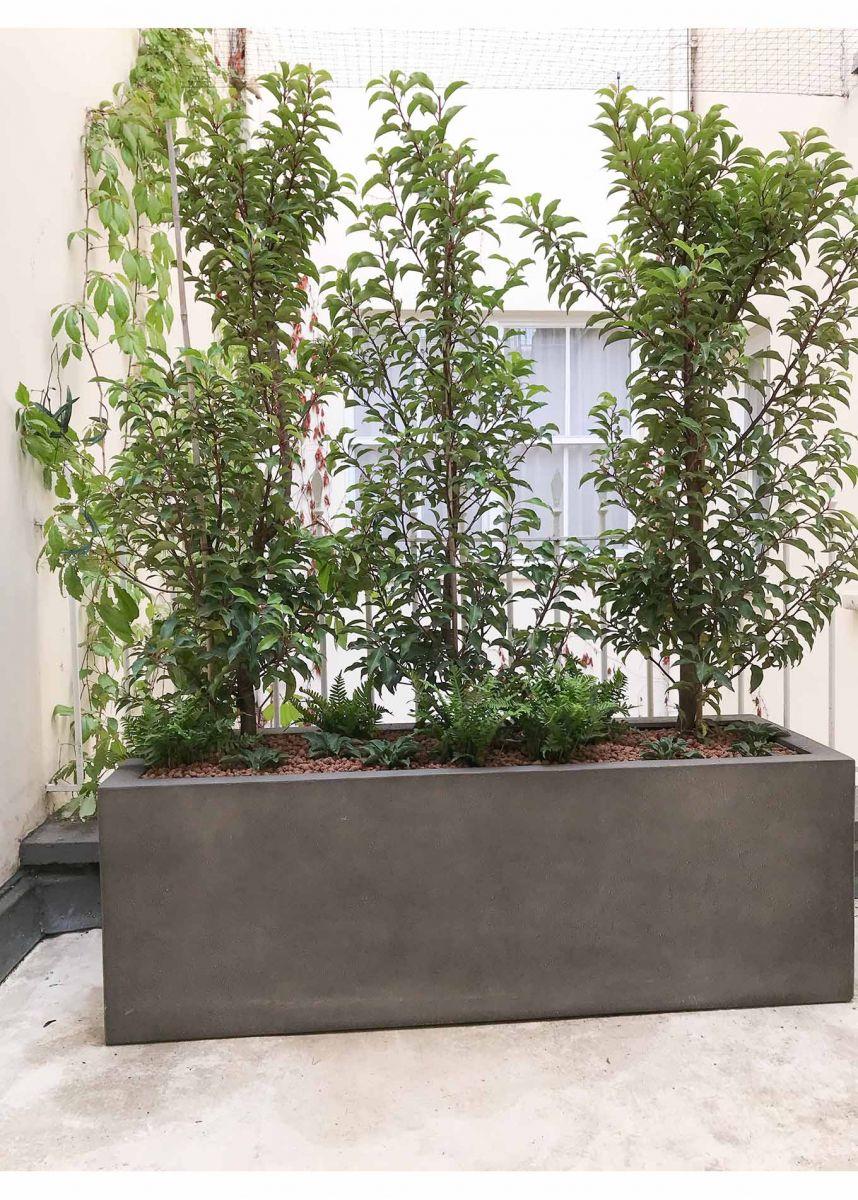 rectangular planter for hedge