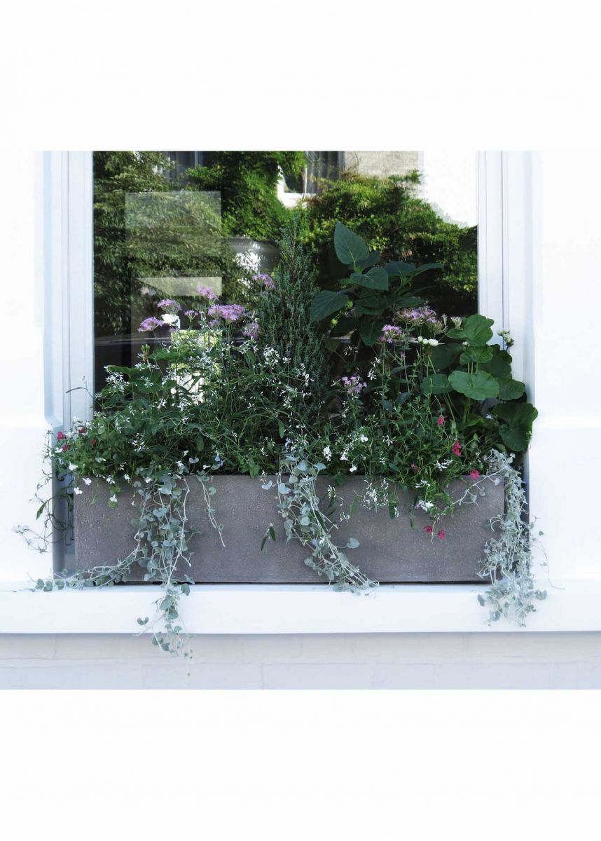 80cm window box frostproof