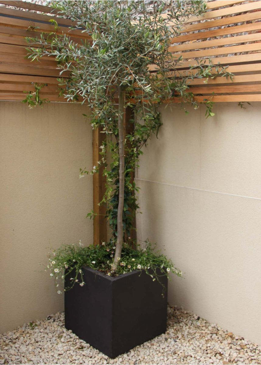 Garden Large Cube Tree Pot
