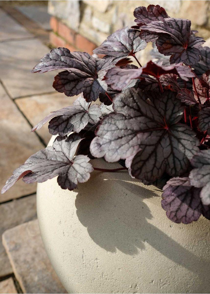 Large white garden plant pots