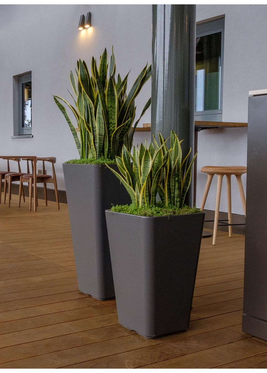Large indoor plant containers