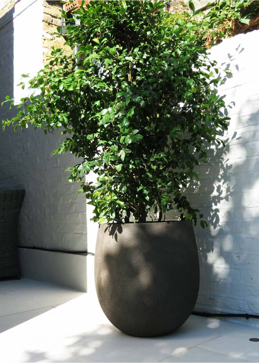 Curved shape plant pot
