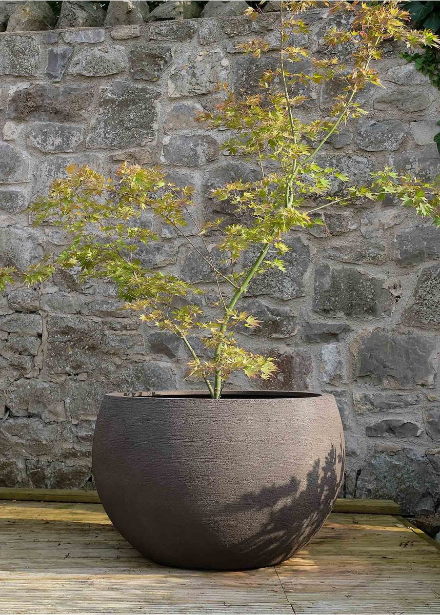 Planter suiatable for an acer
