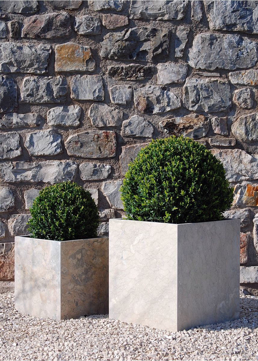 Box Buxus topiary ball sphere