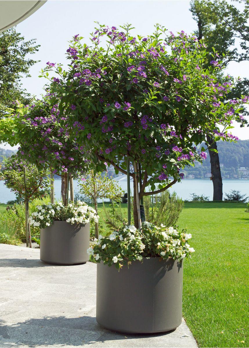 FRC Delta planters 60cm tall