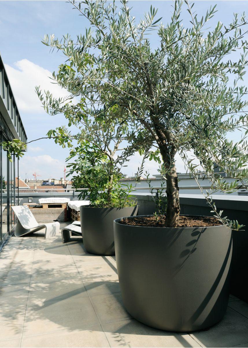 Large round plant pot as tree planter