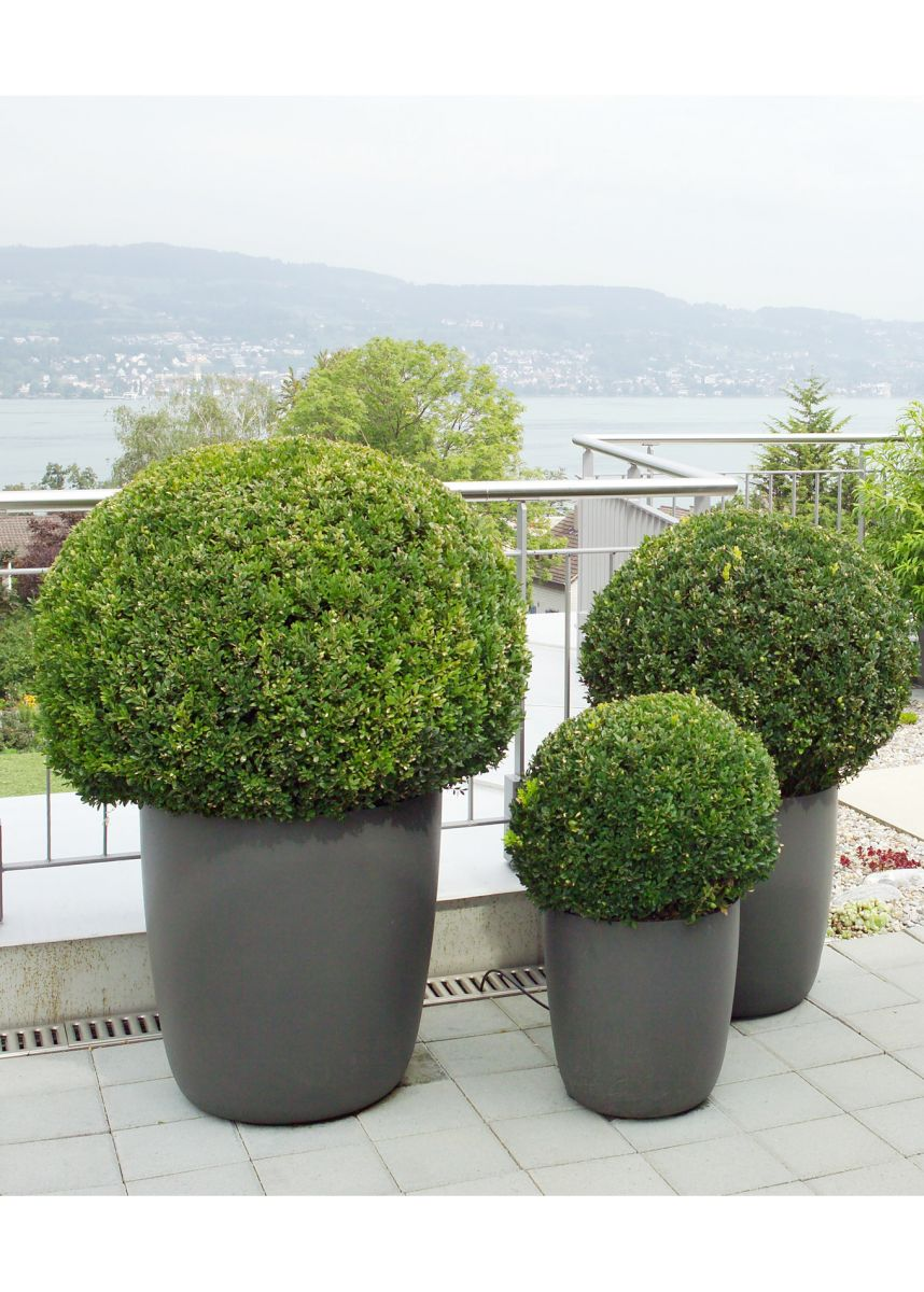 Lightweight tapered round plant pots