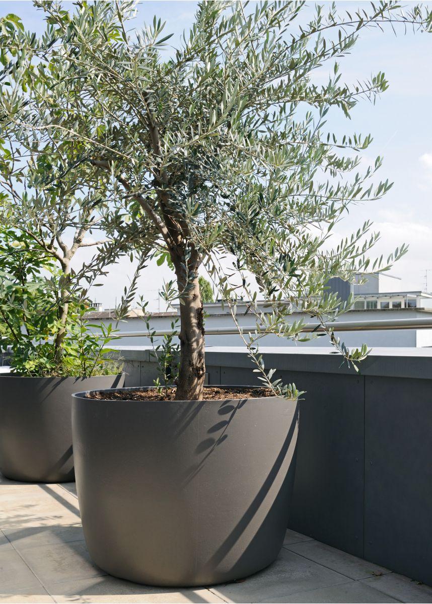 Large shrub and specimen plant pot