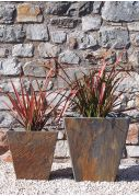 Red New Zealand Flax Phormiums plants