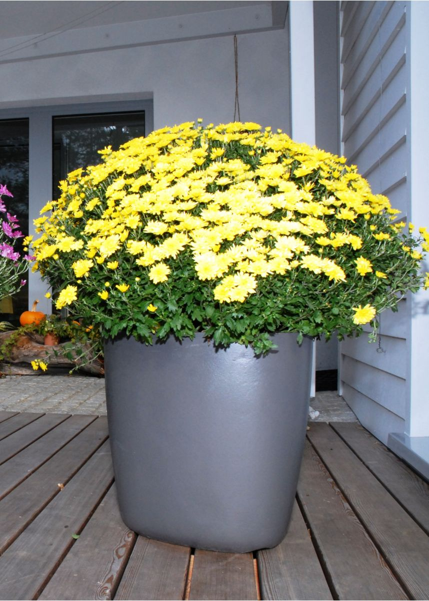Fibre Reinforced Cement external plant pot