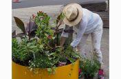 Large planter for public retail spaces