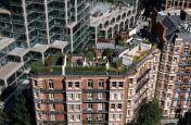Ashley Gardens Rooftop Terrace Garden