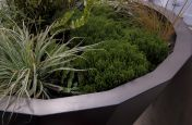 Hotel Street Planters with Planting