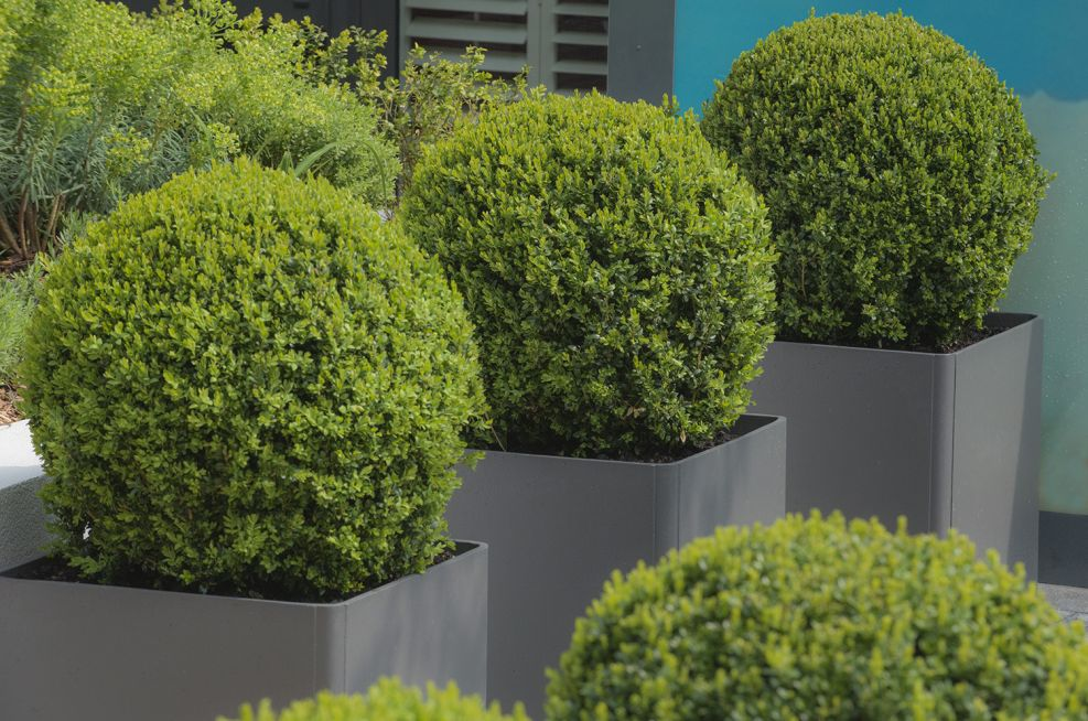 Berkely Homes Cement Boulevard Planters