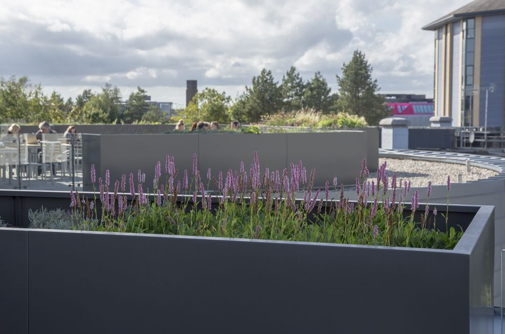 Bespoke Steel Planters at Bournemouth University