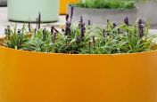 Boulevard Planters Of Custom, Colour At Kings College London