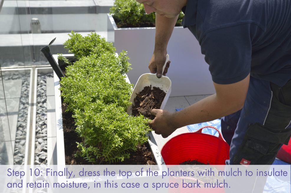Dress the top of the planters to retain moisture