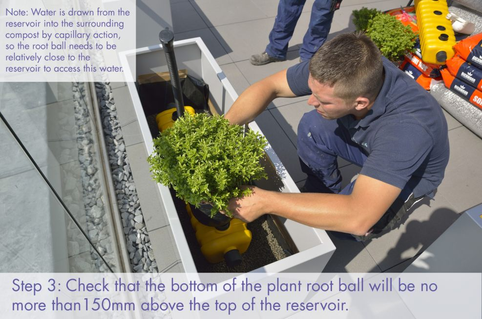 Check plant position within planters