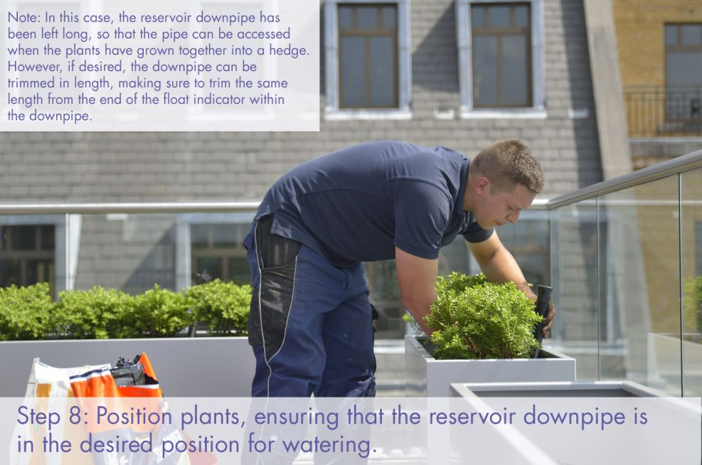 Place plants and ensure correct positioning for reservoir downpipe