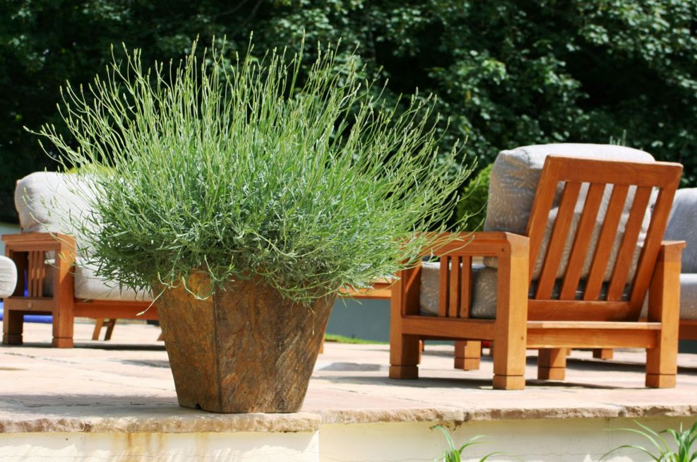 IOTA Slate Planters At A Country Retreat In Wiltshire