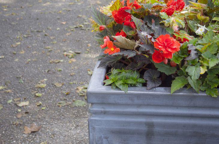 lead planters