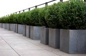 Honed Granite Cube Planters