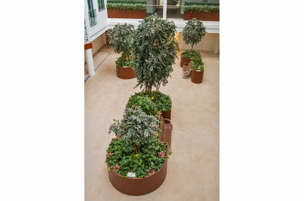 Large planters for trees and shrubs