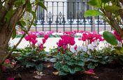 Bespoke planters in London