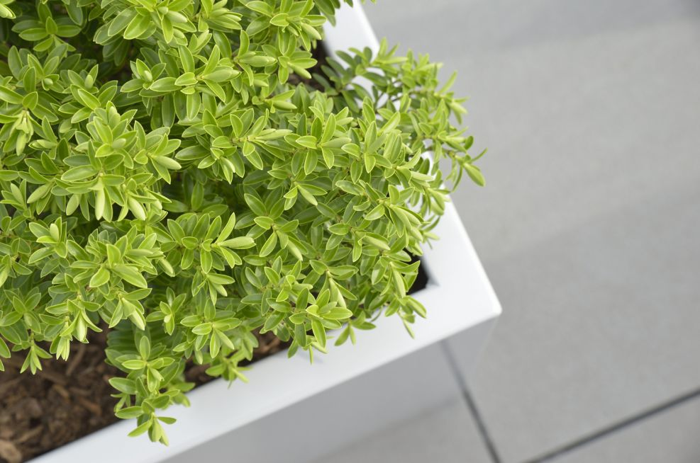External Weatherproof Powder Coated Zintec Steel Planters