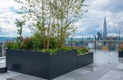 Large tree planters for London terrace
