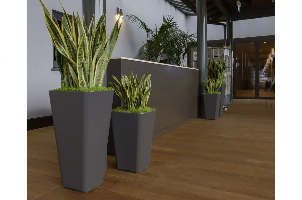 Lightweight Planters for Reception Desk