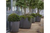 Terrace Planting Scheme