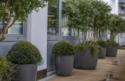 Durable FRC Planters for Trees