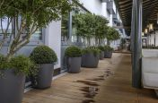 Commercial Tree Plant Pots