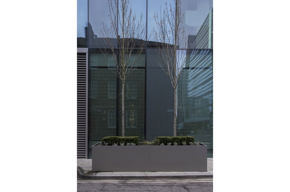 Large Shrub Planters for Public Office Space