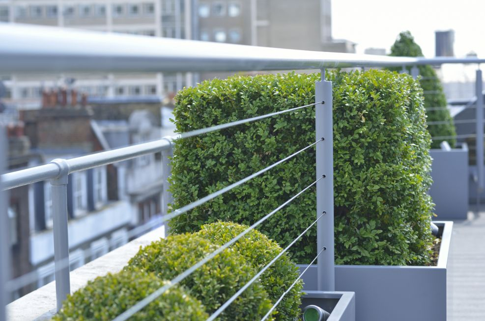Stainless Rigging Security Rail Passes Trhrough The Buxus