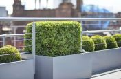 Steel Garden Trough Planters and Tree Planters