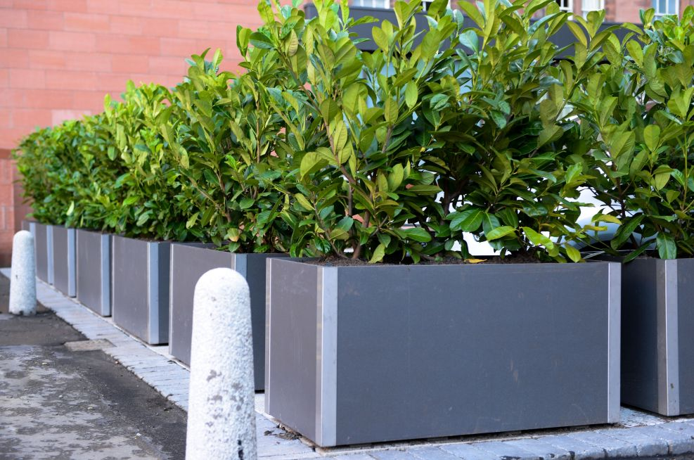 Delta Carat Planters At The Caledonian