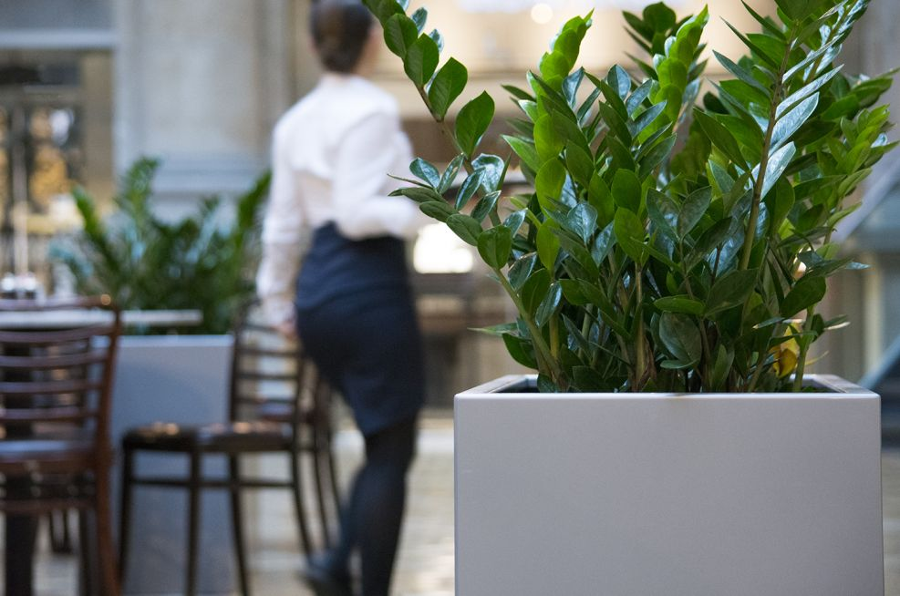 Zintec Steel, Polyester Powder Coated Planters