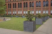 Square Planters for Trees
