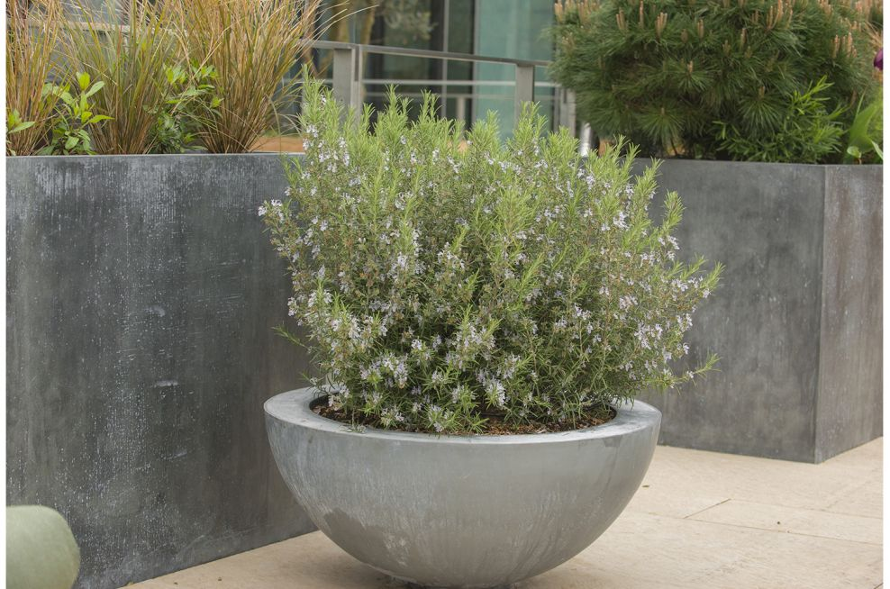 Zinc Planters With Steel Frame