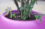 Pink Fibre Reinforced Cement Planters