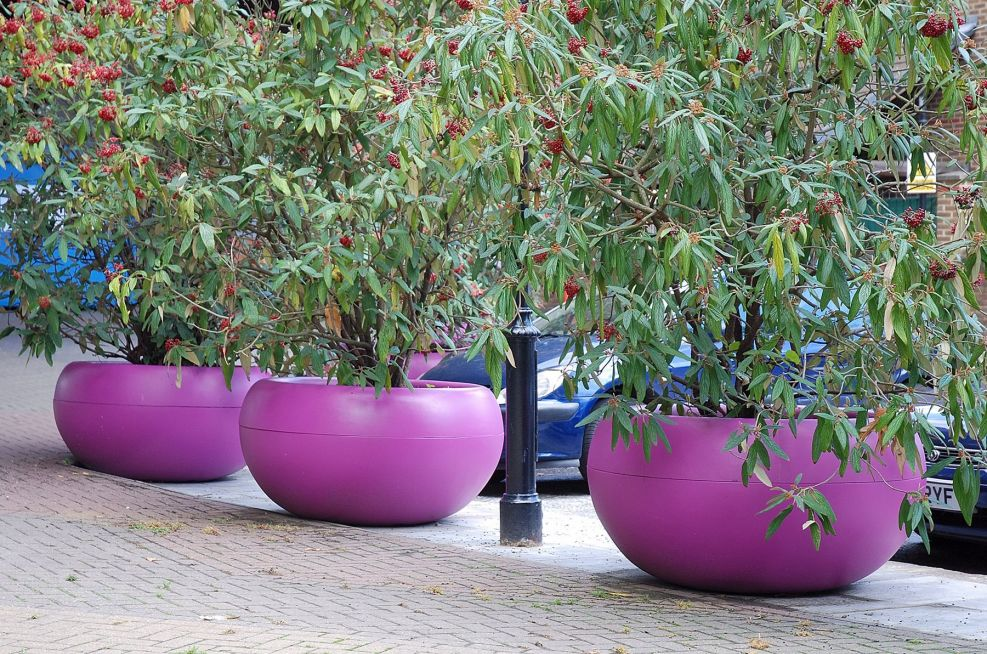 Row of Aladin External Tree Planters in Signal Violet