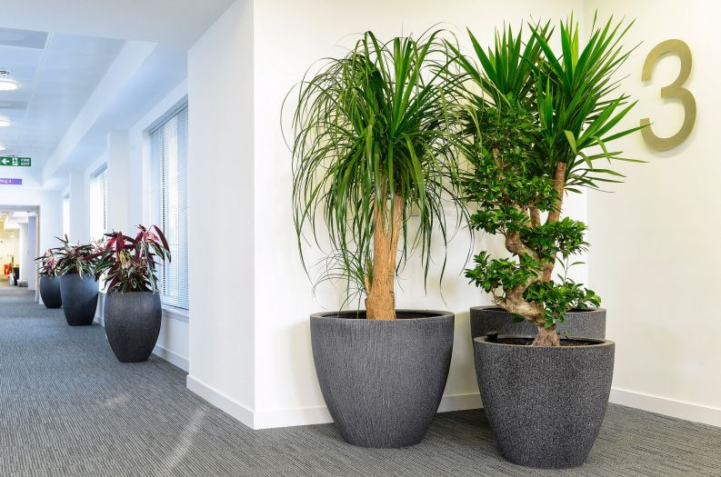 Radial planters at Aberdeen City Council's new corporate headquarters in Marischal College