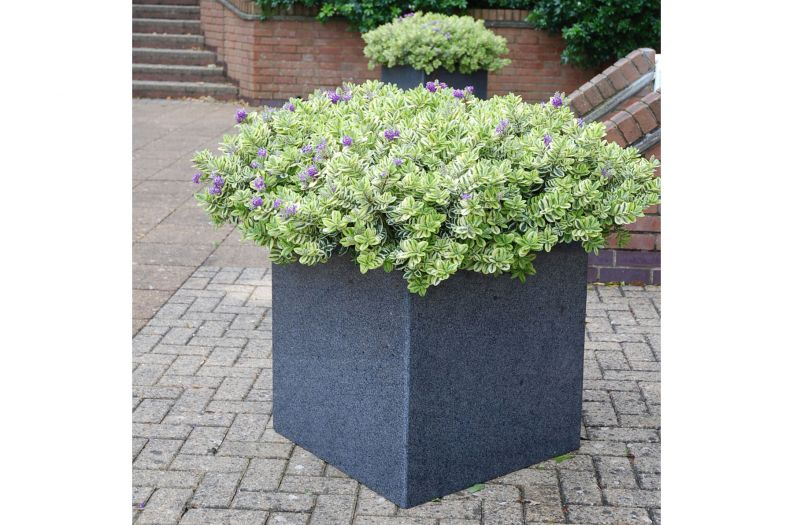 Granite Cube 600 planter with Hebe planting